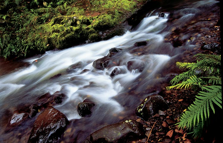 Waipoua Forest Stream