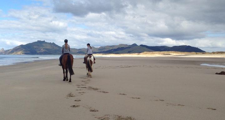 horse riding on beach whangarei heads