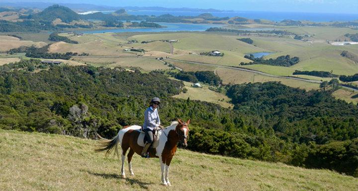 horse trekking whangarei heads