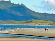 Kauri Mountain Ocean Beach walks