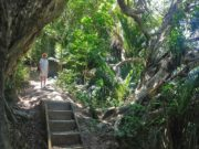 Mt Manaia bush walk and hike