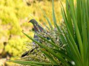 Native New Zealand Birdlife