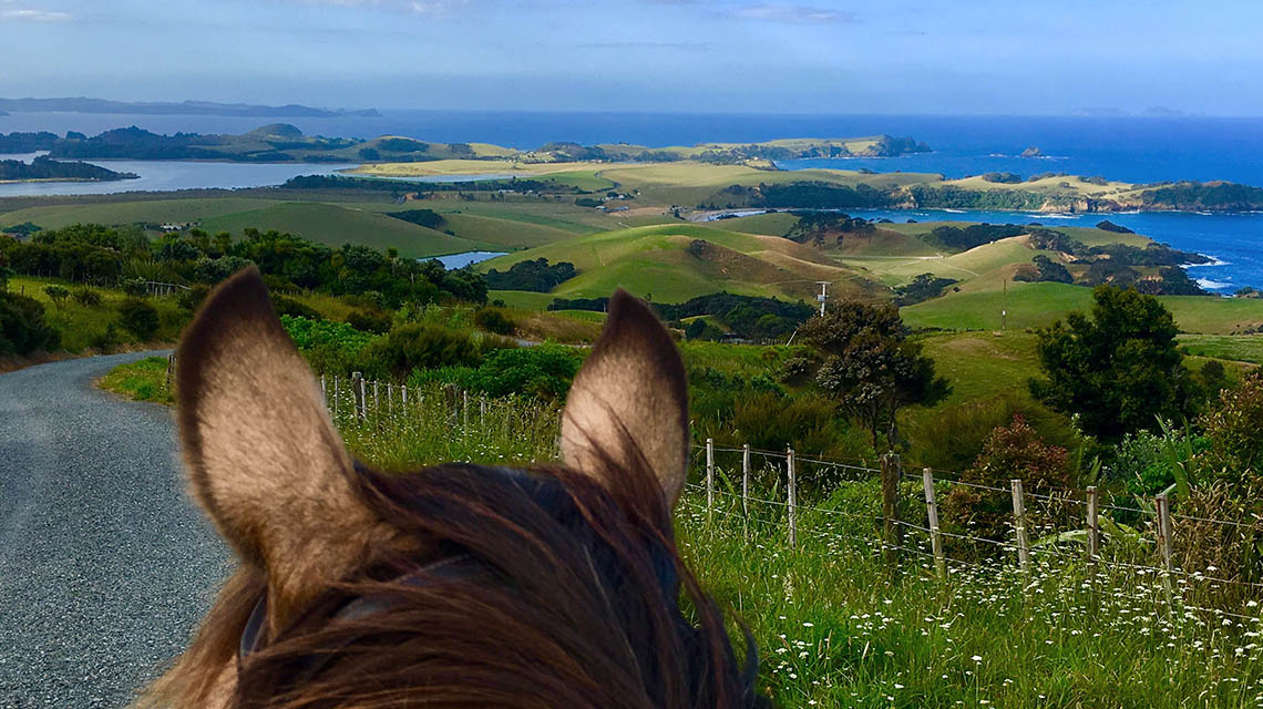 Horse looking to the view while out on a horse trek in Northland